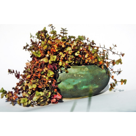 Doniczka zielona Kamień